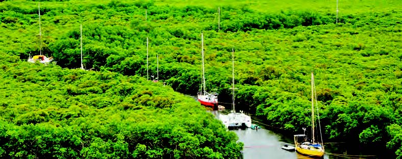 Port Laguerre Hurricane hole, protection in the mangrove. © E. Colombin